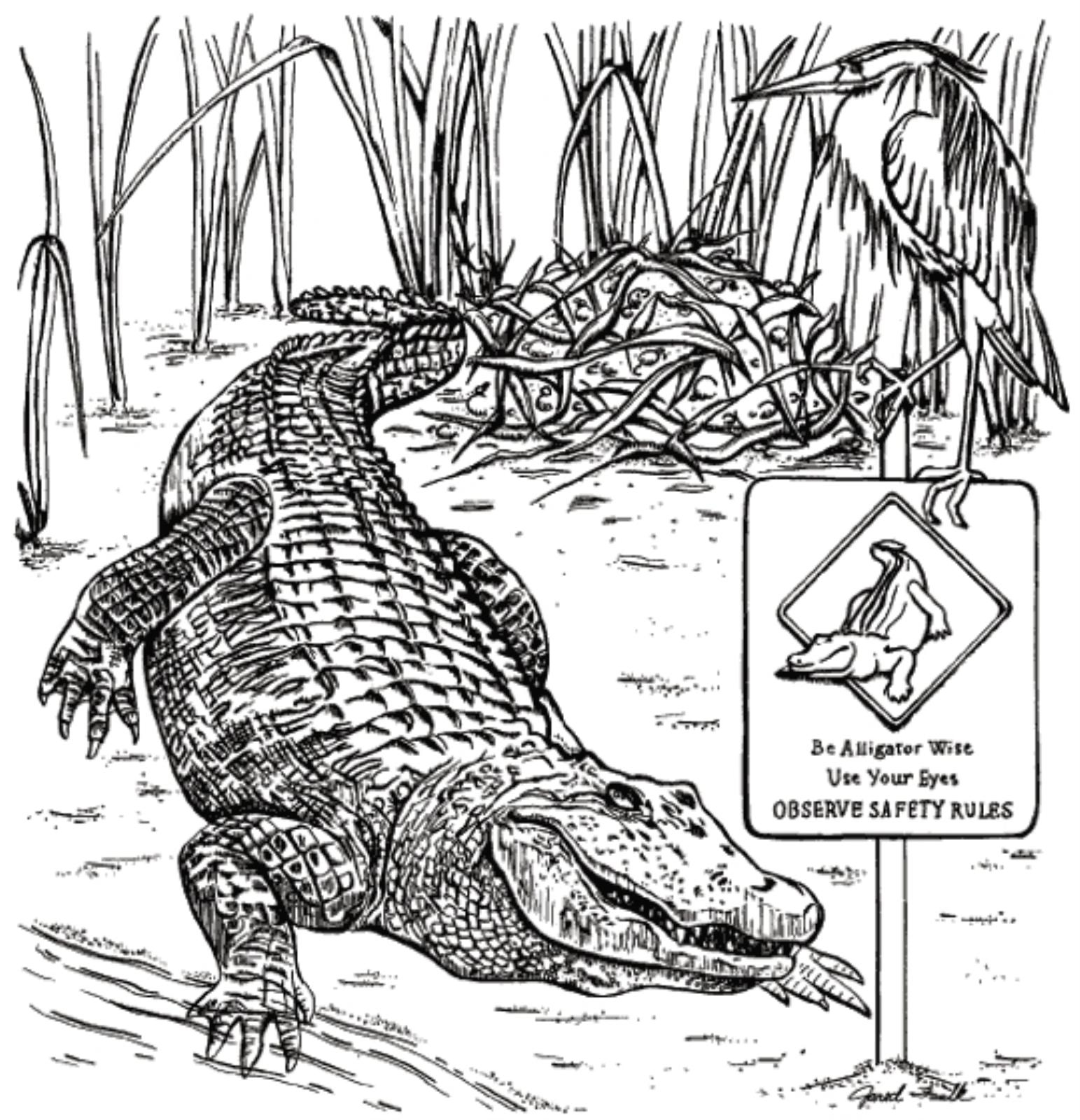 free wildlife coloring book alligator