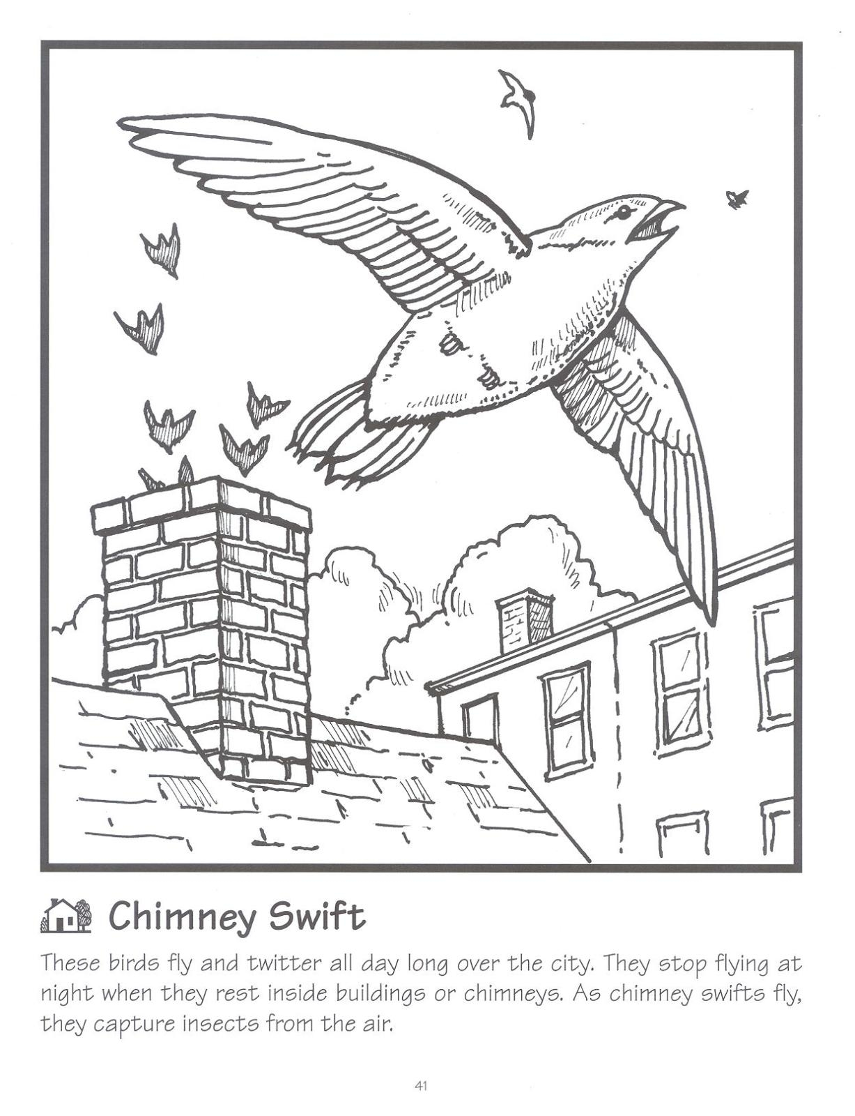 north american bird coloring pages bltidm