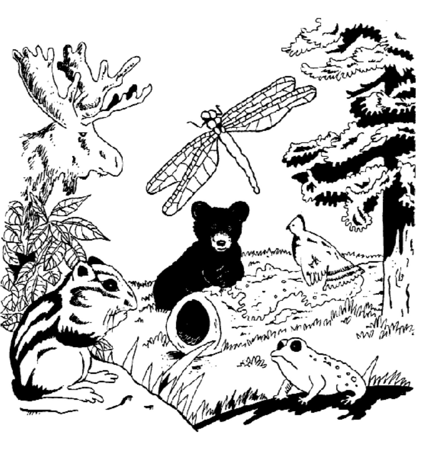 Wildlife Coloring Pages Custom Free Wildlife Coloring Book Decorating Inspiration