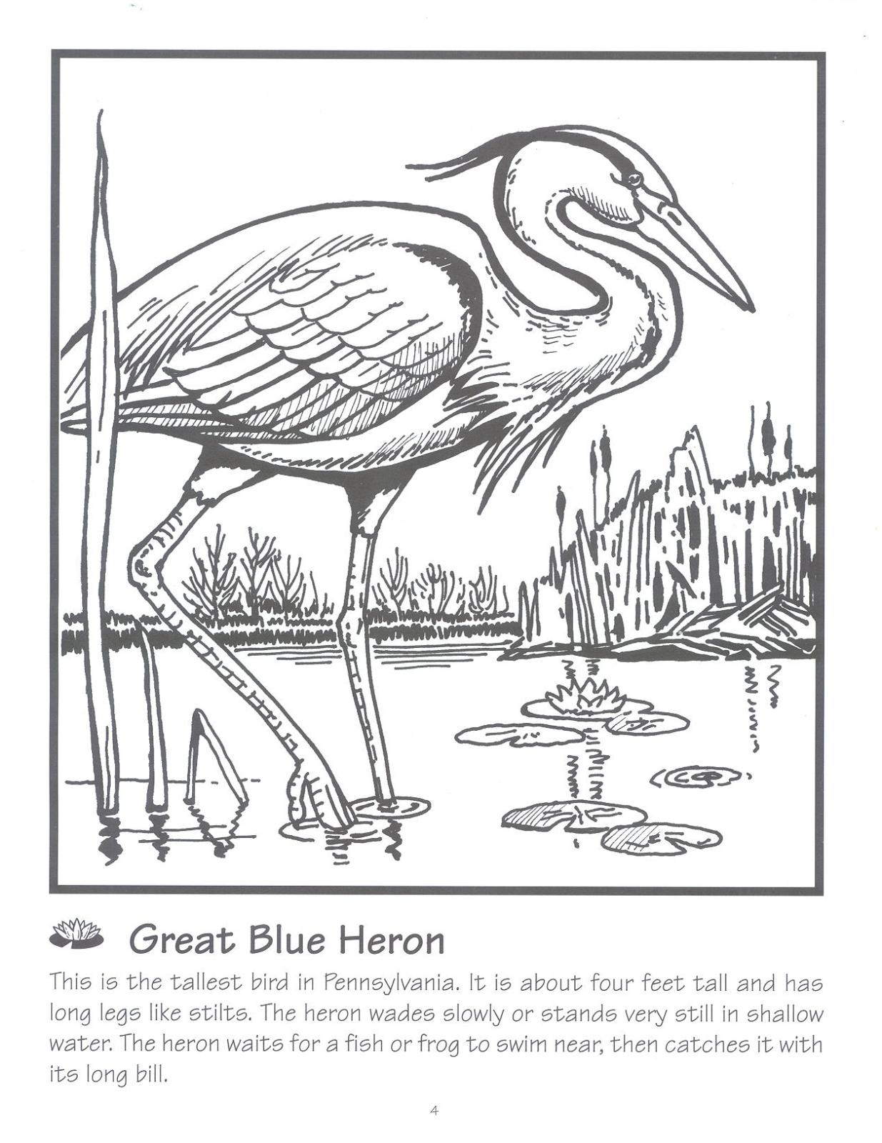 blue heron coloring pages - photo#13