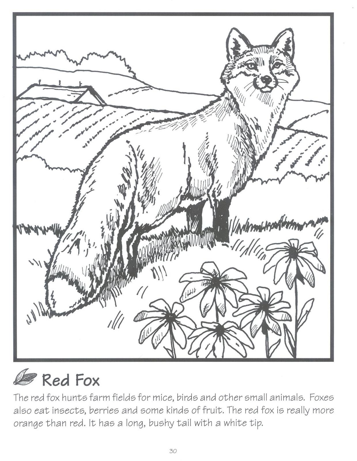 Wildlife Coloring Pages Amazing Free Wildlife Coloring Book Decorating Inspiration
