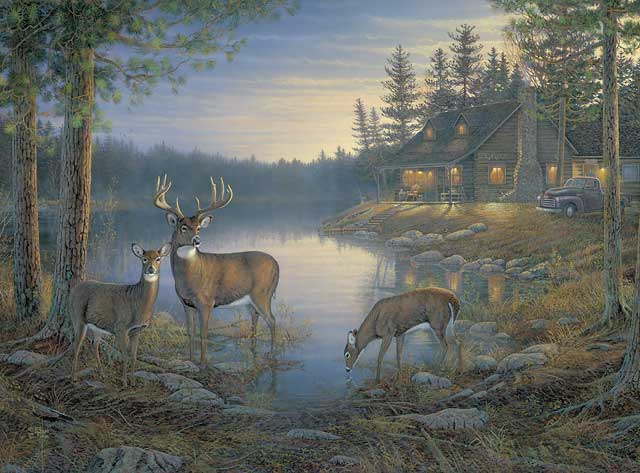 Quiet Places Whitetails By Sam Timm Ebay